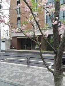 TOEIC会場と桜